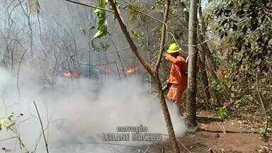 Incêndio atinge nascente de córrego em Gurupi - Incêndio atinge nascente de córrego em Gurupi