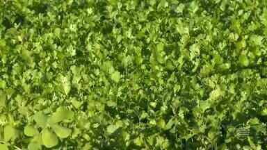 Grande procura incentiva produtores a investirem em produtos orgânicos - Grande procura incentiva produtores a investirem em produtos orgânicos