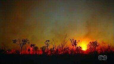 Cerrado em Chamas: vegetação seca propaga chamas e provoca prejuízos - Cerrado em Chamas: vegetação seca propaga chamas e provoca prejuízos