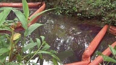 Acidente com locomotiva derrama 12 mil litros de óleo em rio - Acidente ocorreu no pátio de manobras da concessionária Rumo ALL e não deixou feridos.
