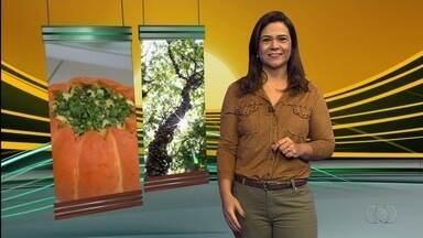 Confira os destaques do Jornal do Campo deste domingo (27) - Programa começa mais cedo neste fim de semana, às 6h30.