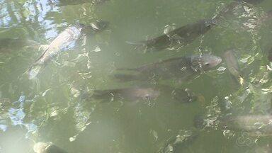 Quatro rios do Amapá estão com nível elevado de mercúrio, aponta estudo - O mercúrio está contaminando os peixes consumidos pela população.
