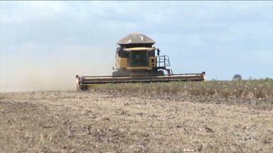 Boa safra de grãos reaquece mercado de máquinas agrícolas no Sul do MA - Tem muito agricultor pretendendo fazer a manutenção do maquinário para reduzir custos.