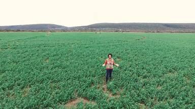 Bahia Rural apresenta especial sobre a região de Irecê - Região tem forte produção agrícola.