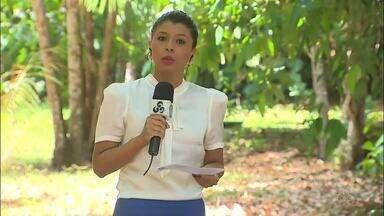 PF investiga fraudes em concessões florestais facilitadas por servidores do Amapá - 2ª fase da operação ocorreu na manhã desta quinta-feira (31). Ex-diretor do Instituto de Meio Ambiente e Ordenamento Territorial (Imap) foi preso.