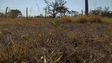 Defesa Civil decreta estado de emergência no DF por causa da baixa umidade do ar - Escolas mudam rotina por conta do clima seco.