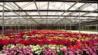 Expoflora tem cactos em forma de coração e outras novidades do mercado - Mais de três mil e quinhentas variedade de plantas e flores estão na Expoflora. A exposição de Holambra acontece de sexta a domingo e vai até o dia 24 de setembro.