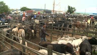 Encontro de compra e venda de animais acontece semanalmente em Dois Riachos - Feira de Gado do município é tradicional.