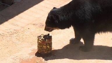 Distribuição de picolés no Zoológico por causa do calorão vira atração - Os picolés são feitos pela diretoria de nutrição do Zoológico e de acordo com a dieta de cada animal.