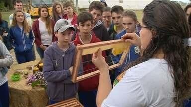 Projeto conscientiza alunos sobre a preservação das abelhas - Projeto conscientiza alunos sobre a preservação das abelhas