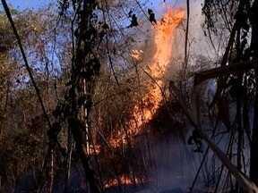 Área verde no Parque Alexandrina volta a ser atingida por incêndio - Local teve dois focos de fogo nesta terça-feira (12).
