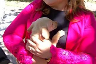 Zoonoses de Itaquaquecetuba faz feira de adoção de cães e gatos - Evento é realizado toda quinta-feira.