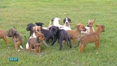 Lei aprovada em Cuiabá estabelece punição por maus tratos contra animais - Lei aprovada em Cuiabá estabelece punição por maus tratos contra animais.