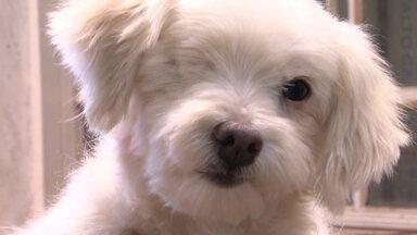 Cachorro de rua ganha transformação impressionante - Conheça a história de Guerreiro, cachorro que vivia nas ruas do Sol Nascente abandonado e passou por uma transformação.