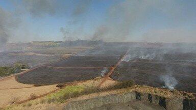 Fogo destrói mata ao lado da Rodovia Antônio Machado Sant'Anna em Ribeirão - Área devastada pelas chamas ainda não foi calculada.