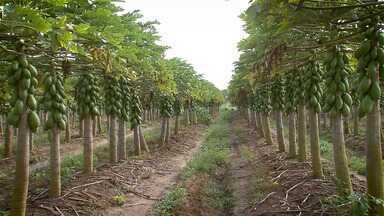 Grandes desafios e novos conhecimentos para a fruticultura do Brasil é tema de congresso - Congresso Brasileiro de Fruticultura foi realizado em Porto Seguro.