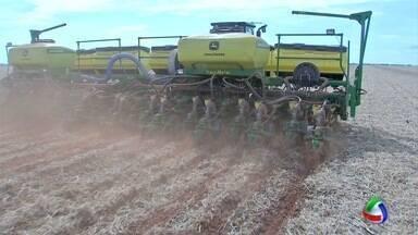 Avanço das lavouras de soja em MT deve ser o menor da história - Avanço das lavouras de soja em Mato Grosso deve ser o menor da história.