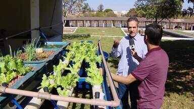 Projeto experimental combina criação de peixes e produção de hortaliças em Uberlândia - Projeto é desenvolvido pela Fundação de Excelência Rural da cidade.