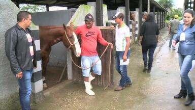 Evento apresenta técnicas para cuida da saúde dos cavalos - Encontro de equidecultura aconteceu em Santana do Ipanema.