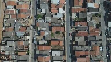 Levantamento mostra déficit de 70% no número de árvores em Campinas - Cerca de 400 mil árvores que deveriam ocupar espaços da cidade não existem.