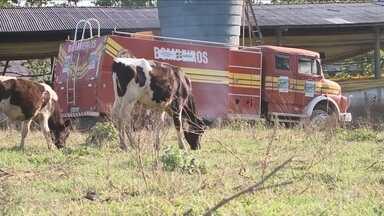 Falta de chuva preocupa agricultores do Oeste - Falta de chuva preocupa agricultores do Oeste