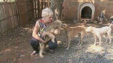 Sem recursos, canil de associação filantrópica pode fechar em Américo Brasiliense, SP - Cerca de 160 cachorros podem ser despejados.