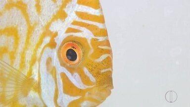 Ração que alimenta mais e prolonga a vida de peixes começa a ser comercializada - Confira a seguir.