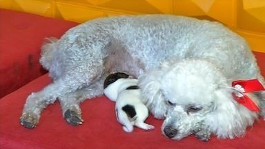 CETV mostra um exemplo de adoção de uma cadela em Juazeiro do Norte - Saiba mais em g1.com.br/ce