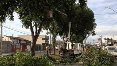 Prefeitura começa a retirar mais de 250 jamelões para evitar acidentes em Goiânia - Objetivo é evitar acidentes devido ao óleo liberado pelas frutas e que ficam em avenida. Comurg vai plantar outras espécies de árvores no local.