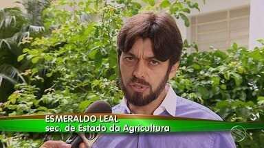 Secretário da agricultura de Sergipe comemora resultado da produção do milho - Secretário da agricultura de Sergipe comemora resultado da produção do milho.