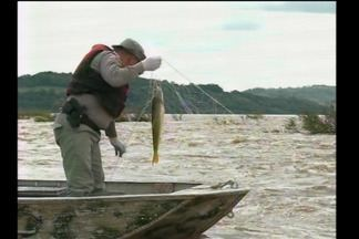Polícia Ambiental reforça combate a pesca predatória - No período da Piracema até o fim de janeiro do ano que vem a pesca está proibida.