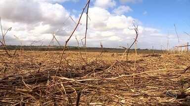 Seca ainda prejudica alguns municípios de Sergipe - Seca ainda prejudica alguns municípios de Sergipe.