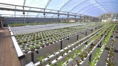 Hortas urbanas produzem alimentos saudáveis em Belo Horizonte - Conheça plantações