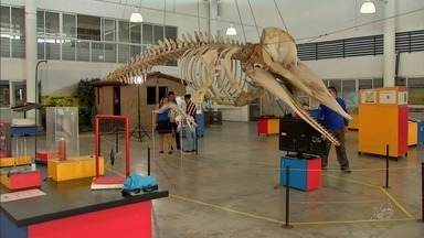 Cearense é especialista na montagem de esqueletos de grandes mamíferos - Ele monta esqueletos de animais para exposições.