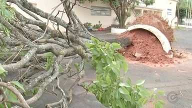 Chuva forte arranca árvores e causa estragos em bairros de Penápolis - Uma tempestade provocou estragos e quedas de árvores em alguns bairros de Penápolis (SP) no início da tarde deste sábado (18). O vento forte veio acompanhado de chuva e, segundo os bombeiros, foi relatado granizo em alguns pontos.
