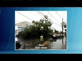 Forte chuva provoca transtornos em Governador Valadares - Árvore caiu em uma avenida e interrompeu o trânsito.