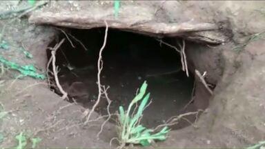 Mais de trinta presos fogem da cadeia de Ponta Grossa - Os presos cavaram um túnel até o quintal vizinho da delegacia. Onze detentos continuam foragidos.