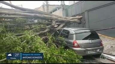 Chuva forte derruba árvore de grande porte em cima de três carros na Zona Sul - Muro de condomínio no Jaguaré também desabou em cima de quatro carros.