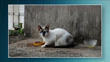 Homem é preso por vizinho após tentar atirar em gato - Ele perseguiu o gato pela rua e foi preso em flagrante pelo vizinho, que é policial militar.