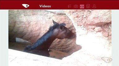 Cavalo é resgatado de fossa em Cachoeiro de Itapemirim, ES - Animal foi retirado por volta das 13h.