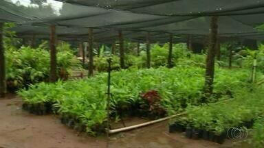 Centro de reabilitação deve receber usuários de drogas em Araguaína - Centro de reabilitação deve receber usuários de drogas em Araguaína