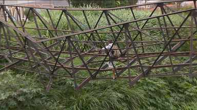 Moradores se arriscam em ponte caída entre o Sítio Cercado e o Boqueirão - A ponte está pendurada há quase um mês.