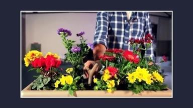Empresa francesa lança aparelho que monitora a saúde das plantas - O aparelho, chamado de Flower Power, é inserido no solo do jardim ou em um vaso. Conectado a um smartphone, ele monitora a temperatura, fertilização, umidade do solo e a quantidade de água que deve ser colocada diariamente.