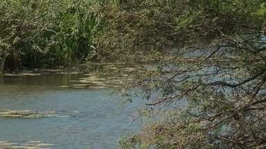 Disputa por água de rio gera conflito entre pequenos e grandes produtores, na região norte - Os pequenos agricultores acusam os grandes produtores de usar mais do que deveriam a água do rio Salitre, impedindo que as roças sejam irrigadas.