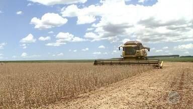 Pesquisa da Conab registra queda na produção de grãos em MS - Já no cultivo do amendoim 2ª safra, Mato Grosso do Sul aparece como único produtor do Centro-Oeste, com previsão de R$ 10 mil toneladas, queda de 4,8%.