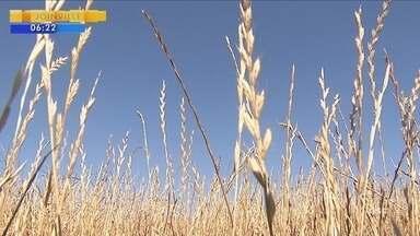 Agricultores apostam na produção de soja na safra de verão - Agricultores apostam na produção de soja na safra de verão