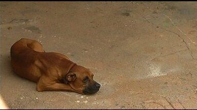 Polícia Civil começa apurar caso das irmãs atacadas por cães em Três Ranchos - Menina de 7 anos sofreu lesões mais graves.