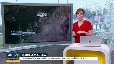 Exame confirma que Febre Amarela matou dois macacos em Guarulhos - Prefeitura vacinou preventivamente mais de 240 mil pessoas