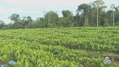 Produtores rurais têm pouco tempo para fazer cadastro ambiental rural - Divino Caetano.