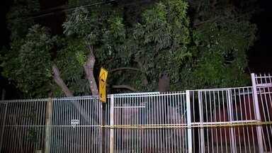 Três casas são interditadas no Paranoá porque árvore pode cair - Em áreas particulares quem faz a poda é o proprietário, mas antes ele precisa procurar a administração regional. É preciso ter uma autorização para fazer isso.